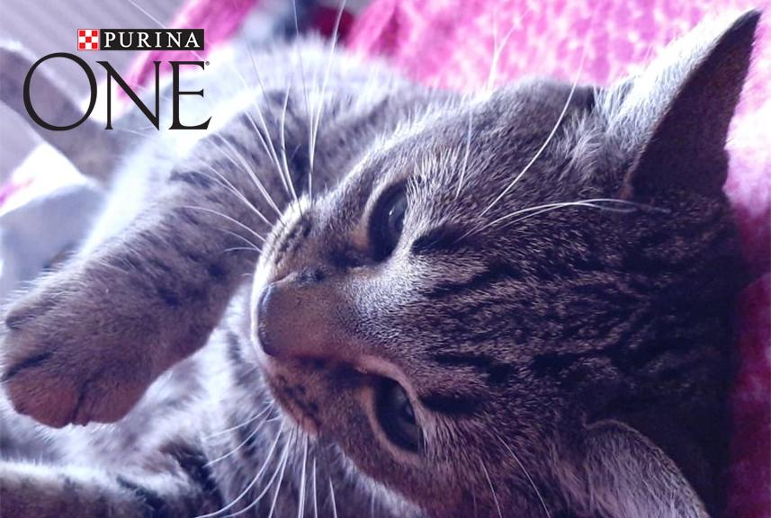 Secret de felina. Meow